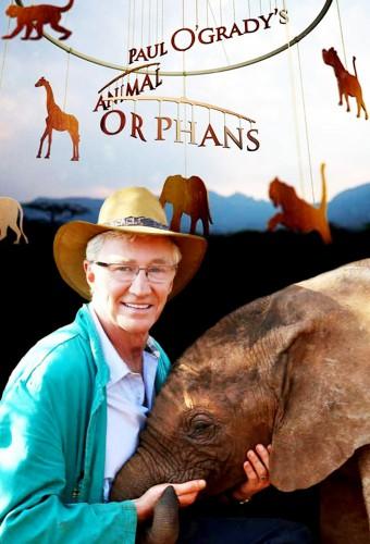 Paul O Gradys Animal Orphans S01E01 1080p HDTV H264 LiNKLE