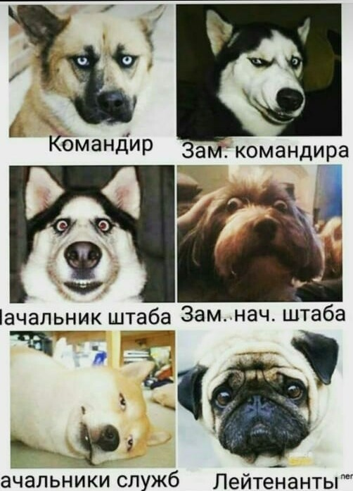 https://i3.imageban.ru/out/2021/02/05/11c6e941a406fb65ce39420ef69347aa.jpg