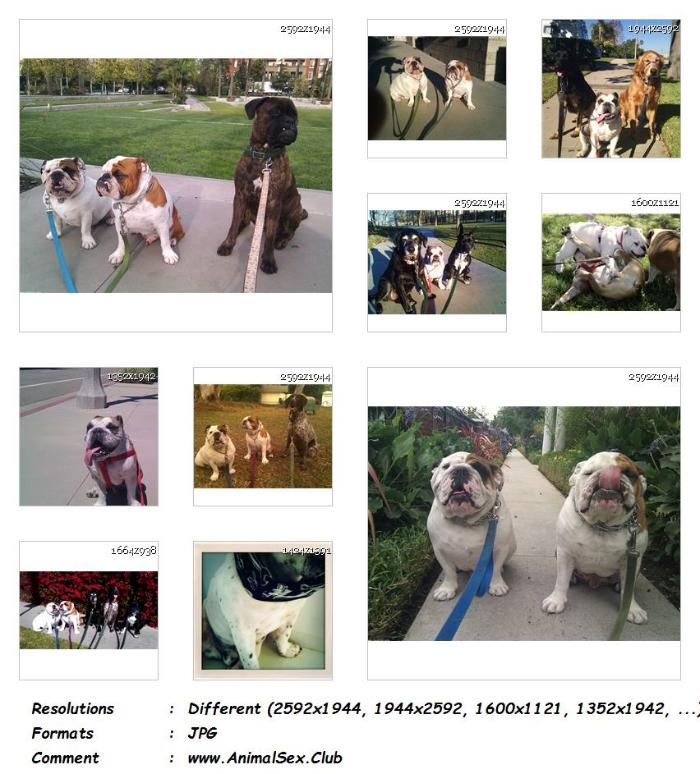 df8e1f14b5a93692e4ec4923873de776 - Bulldog Showing Pink - 35 Pics - Animal Sex Genitals Pictures