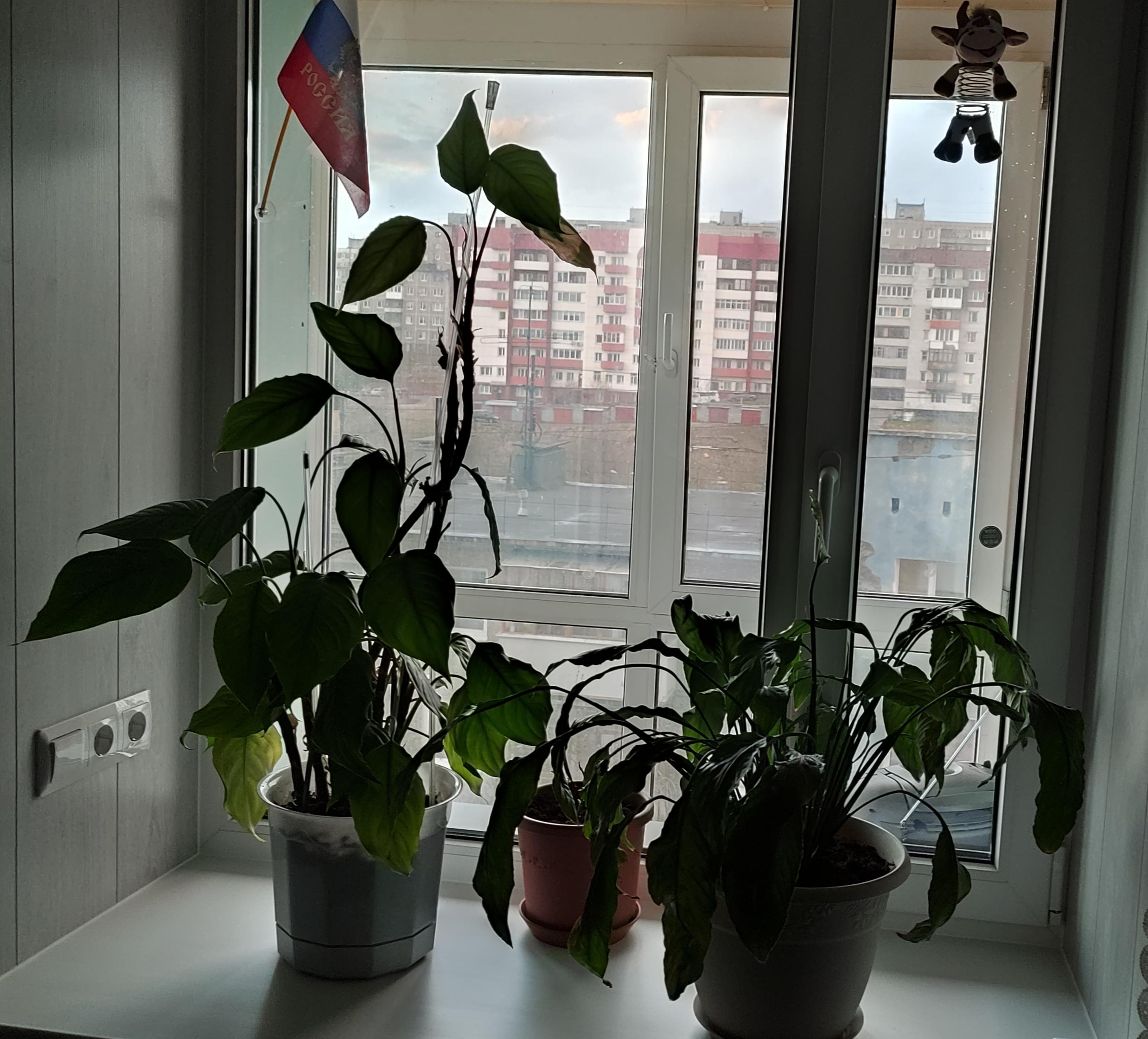https://i3.imageban.ru/out/2021/05/28/944e0c6407aa133a768ed89200dba25e.jpg