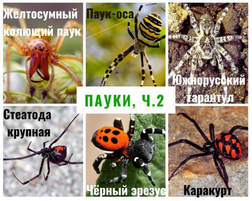 Пауки и их виды