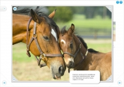 Мои питомцы. Лошади (2011/RUS)