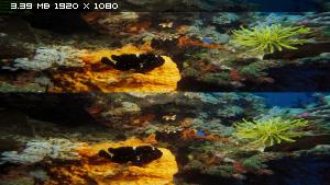 На глубине морской в 3Д / Under the Sea 3D Вертикальная анаморфная