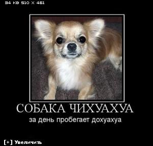 http://i3.imageban.ru/thumbs/2012.12.10/8e28bd1855d4bc316f6c75f64618ab5f.jpg