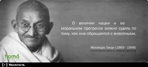 https://i3.imageban.ru/thumbs/2013.10.20/016836af0551bd68803d9b27c382320a.jpg
