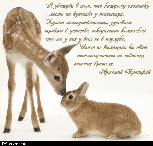 http://i3.imageban.ru/thumbs/2014.01.04/b590b37b7a3de4e4e156f97e4bab6d23.jpg