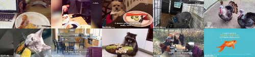 00226f8608f15ced81c9b8d68161ff34 - Pets Celebrate Thanksgiving  Our Domestic World