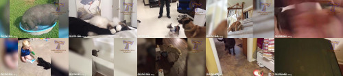 3d10ea3123b460b0ee6fa59cfe418607 - Take Your Time To Relieve Stress And Laugh Hard - The Funniest Animals
