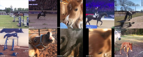 5e65014774590fe15ad77b734afe5861 - Sexy Horse! Cute And Funny Horse Videos Compilation Cute Moment 22