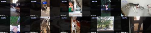 8c00e4e1b6867427cd24d3e5ab0fa4d3 - Husky Dog Is The Best Comedian  Funny Husky Dogs Video Compilation