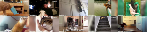 8dac8173e3b6413bae0cd531b6870a2c - The Amazing, Adorable And Lazy 9 Lives Of Cats
