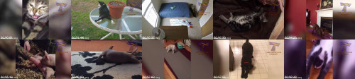 a7cc4929fb40a05a2101904c16e59b2b - Who Is Lazier, You Or These Pets Funny Cats And Dogs