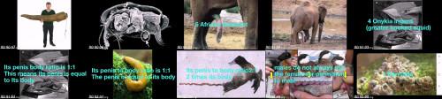 e83dcf6b34cb8348623d91e7e95f23b9 - 7 Animals With Largest Penis 2020