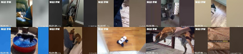 eba8abf10a5b847db782e40be63f9687 - Super Crazy Funny Dogs Videos 2020 - It's Time For Laughing Too Hard!