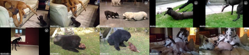 ffd5740a02f651246aafe66ed231465d - Large Dogs Funny Dog Video Compilation 2017