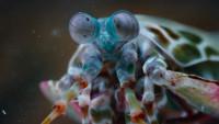 Жизнь в цвете с Дэвидом Аттенборо / Life in Colour [Сезон: 1] (2021) WEB-DL 1080p   FocusX